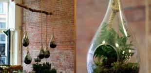 Terrarium - a garden in miniature
